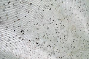 mildew on canvas