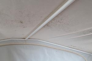 mildew in trailer